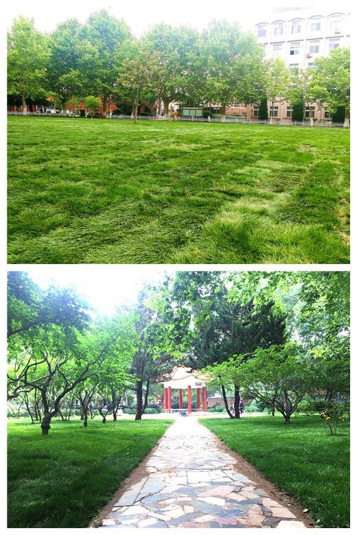 学校校园绿化提升工程取得阶段性成效-青岛科技大学